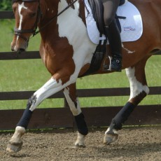 Equilibrium Stretch & Flex Flatwork Wraps (Black)