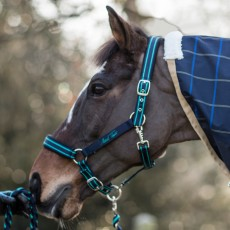 Mark Todd Headcollar (Navy & Aqua)