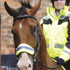 Equisafety POLITE Noseband (Yellow)