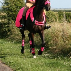 Equisafety Reflective Adjustable Leg Bands (Pink)