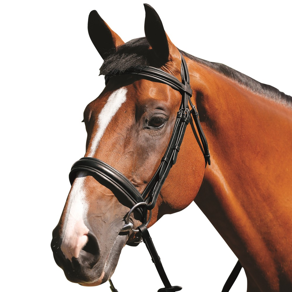 Mark Todd Padded Cavesson Bridle Black Old Dairy Saddlery