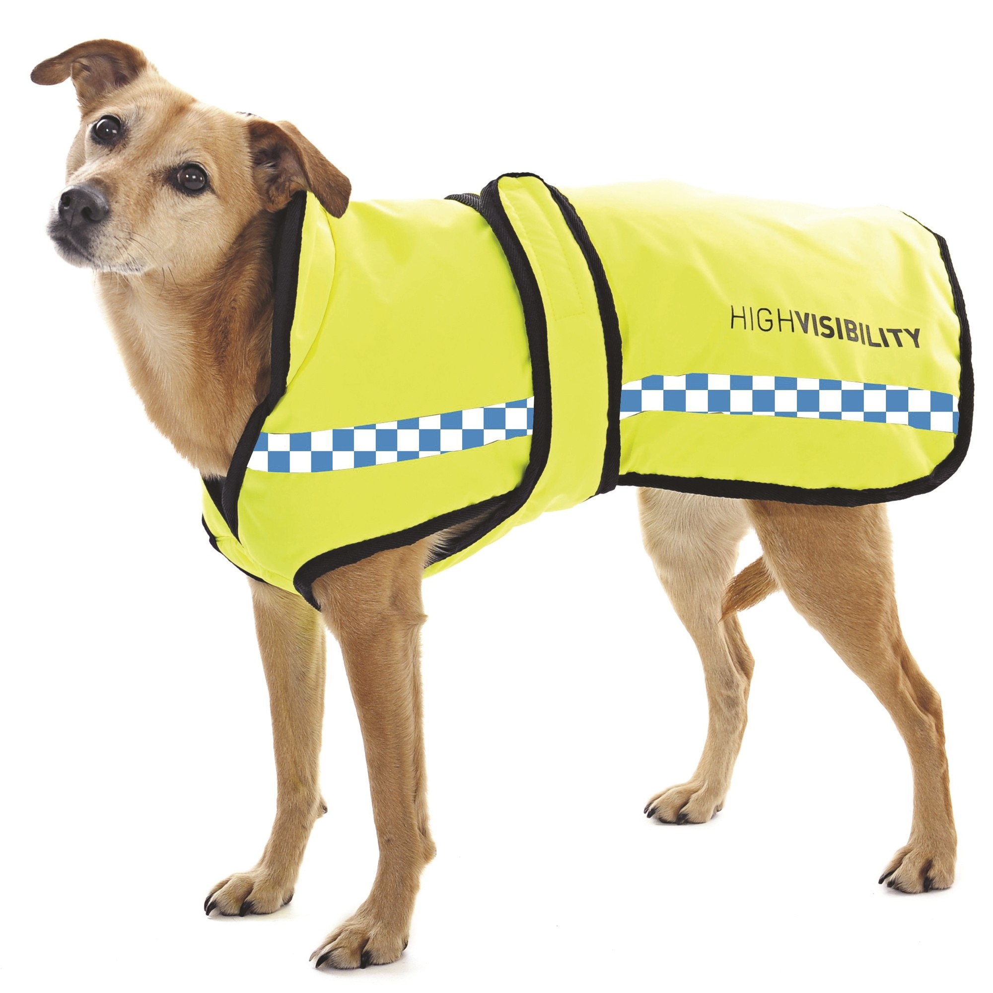 Equisafety POLITE Waterproof Dog Rug Yellow
