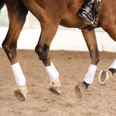 Equilibrium Stretch & Flex Flatwork Wraps (White)
