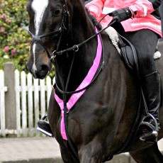 Equisafety Reflective Neck Band (Pink)