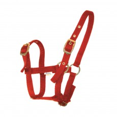 JHL Foal Headcollar (Red)