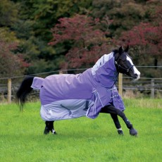 Masta Fieldmasta 350g Fixed Neck Turnout Rug (Purple/Grey)