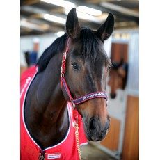 Whitaker Padded Fleece Headcollar (Red/Navy)