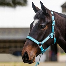 Mark Todd Deluxe Padded Headcollar With Leadrope (Aqua)