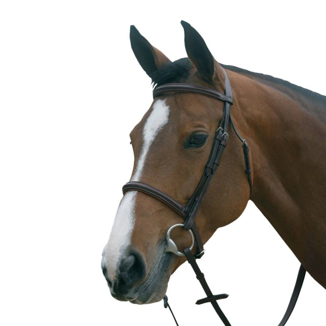 Mark Todd Plain Raised Bridle With Cavasson Noseband