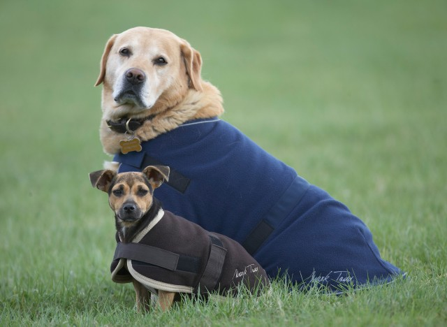 Mark Todd Fleece Dog Rug (Navy)